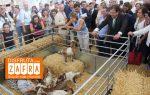 Feria de Zafra – Feria Internacional Ganadera de Zafra